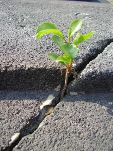 Sidewalk crack with green weed growing up