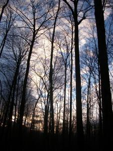 """sunset through bare trees"" photo by Julia Walsh FSPA"