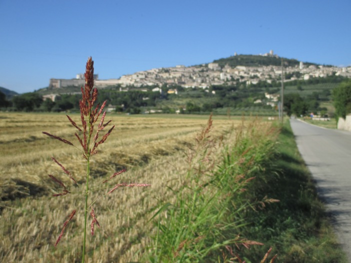 """Assisi and the field"" Photo by Julia Walsh FSPA"