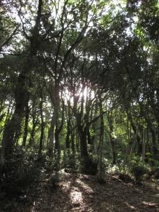 Rays of Light through Tall Trees, La Carceri, Italy. Photo by Julia Walsh FSPA