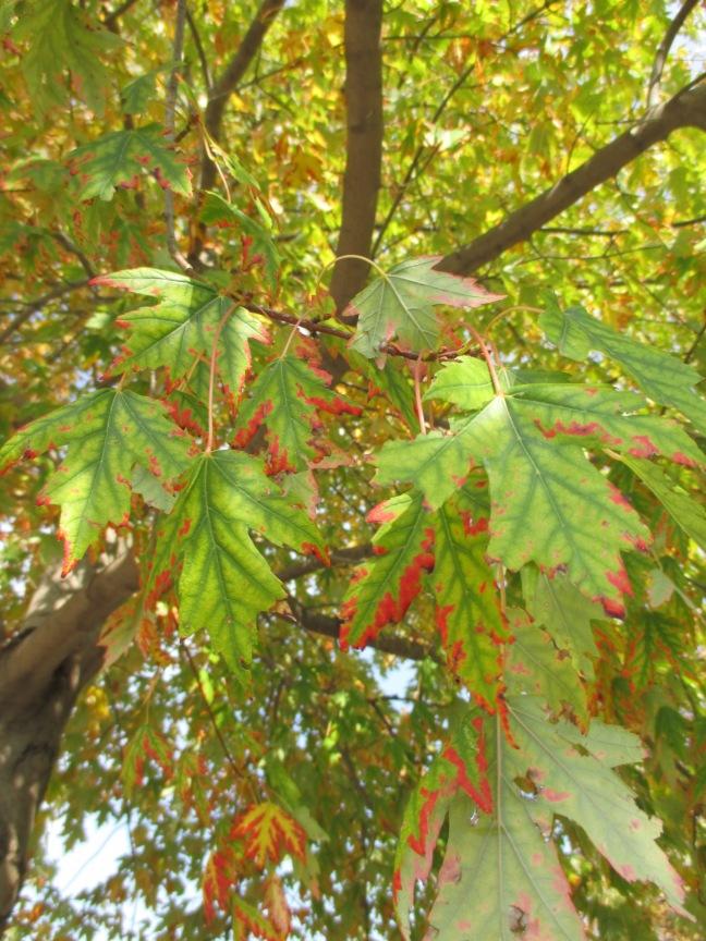 """leaves will fall"" photo by Julia Walsh, FSPA"