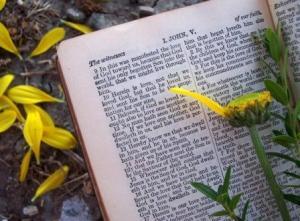 Bible-flower-petals